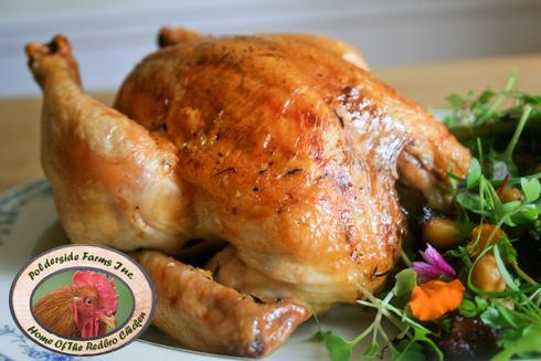 windsor polderside redbro chicken