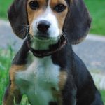 biologically appropriate raw food for dogs